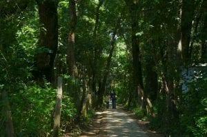 Top 10 best Picnic spots in Kathmandu Valley 14